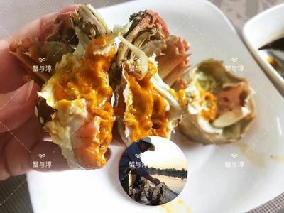 江苏省南京市高淳区固城湖大闸蟹 2.0-2.5两 统货