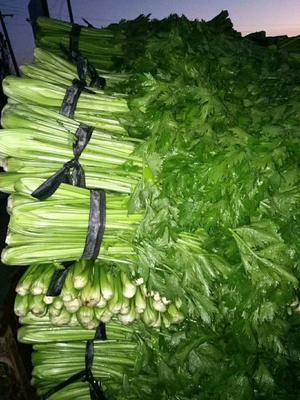 山西省忻州市忻府区西芹 45~50cm 大棚种植 0.5~1.0斤