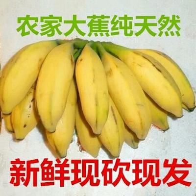 广东省茂名市高州市大种高把 七成熟 40斤以下