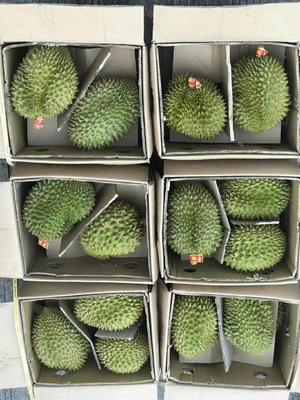 广西壮族自治区南宁市江南区巴掌榴莲 80 - 90%以上 15.5公斤