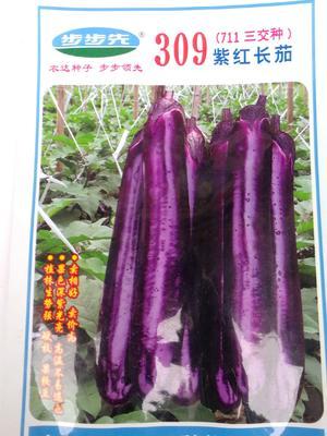 广东省江门市开平市茄子种子