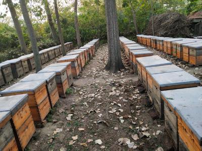 安徽省滁州市来安县中华蜜蜂