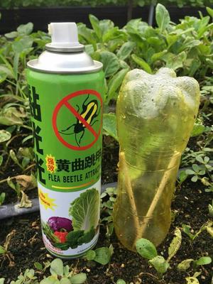 广东省惠州市博罗县诱虫板