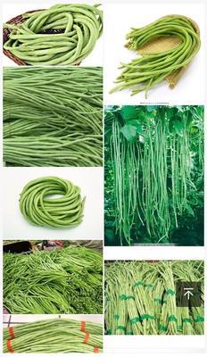 贵州省黔东南苗族侗族自治州天柱县长豇豆 30cm以上 不打冷