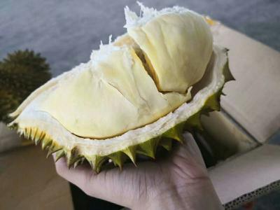 广西壮族自治区崇左市凭祥市巴掌榴莲 90%以上 2公斤以下