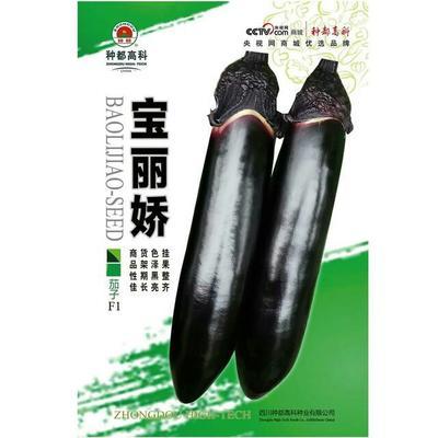 四川省成都市双流县茄子种子