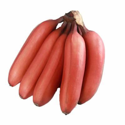 江苏省南京市雨花台区红香蕉 八成熟 40 - 50斤