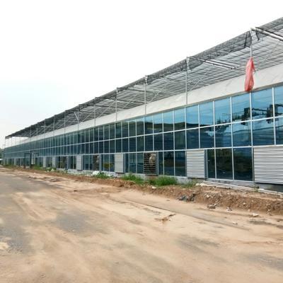 山东省潍坊市青州市玻璃温室大棚