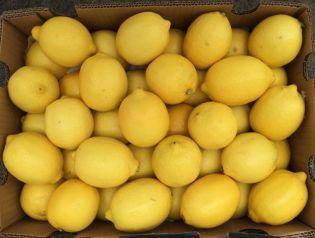 广东省广州市白云区尤力克柠檬 2 - 2.6两