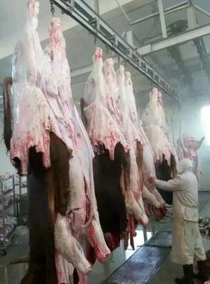 山东省临沂市兰山区牛肉类 生肉