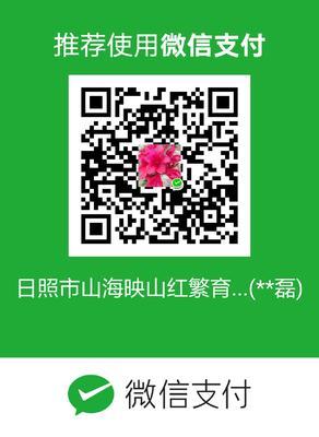 山东省日照市东港区映山红 0.5~1米