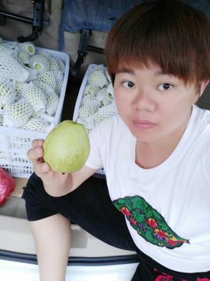 福建省漳州市平和县红心芭乐 150-200克