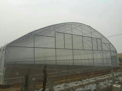 山东省潍坊市寿光市钢管大棚