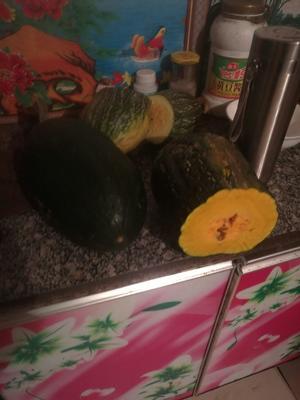 山西省忻州市神池县日本南瓜 4~6斤 扁圆形