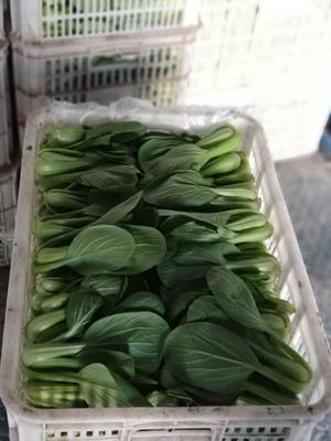 江苏省南通市通州区金品28青梗菜 1~2两
