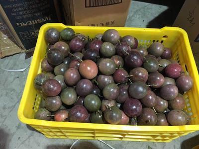 广西壮族自治区桂林市灵川县紫红色百香果 50 - 60克