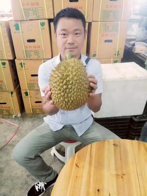 越南金枕榴莲 90%以上 3 - 4公斤