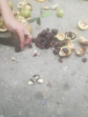 广西壮族自治区崇左市凭祥市自榨纯菜籽油