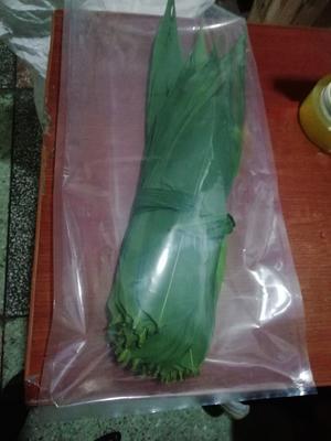 重庆荣昌县粽子叶