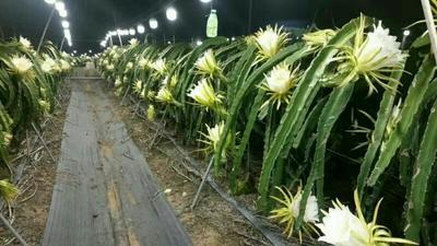 山东省潍坊市寿光市植物补光灯