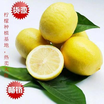 重庆潼南县尤力克柠檬 2.7 - 3.2两