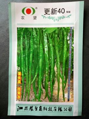 江苏省宿迁市沭阳县羊角椒种子 95%以上 杂交种