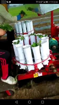 山东省潍坊市寿光市选种育苗机械