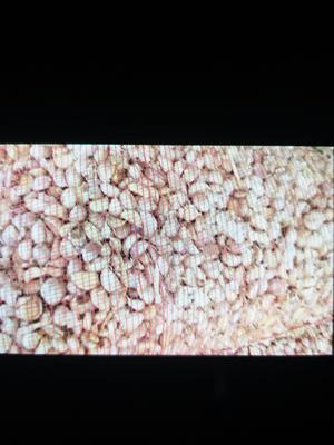 这是一张关于金乡大蒜 混级统货 多瓣蒜的产品图片
