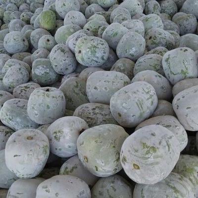 山东省聊城市莘县一串铃冬瓜 2斤以上 白霜