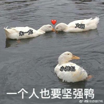 湖南省长沙市芙蓉区大白鹅 母 全散养 4-6斤