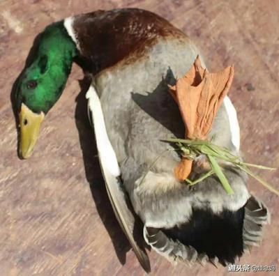 这是一张关于青头麻鸭 统货 全散养 4-5斤的产品图片