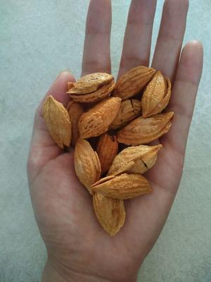 新疆维吾尔自治区新疆维吾尔自治区阿拉尔市巴旦木 1年 带壳