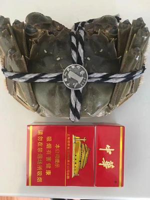 这是一张关于阳澄湖大闸蟹 5.0两 公蟹的产品图片