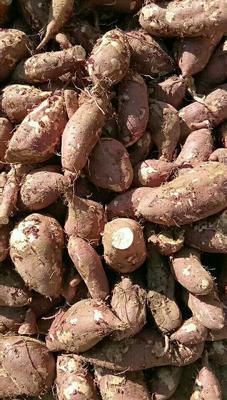 山东省济宁市邹城市济薯25号红薯 红皮 混装通货