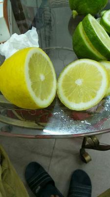 广东省阳江市阳春市香水柠檬 2.7 - 3.2两