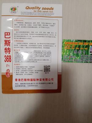 山东省临沂市兰陵县泡椒种子 97%以上 杂交种