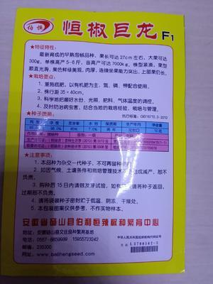 山东省临沂市兰陵县牛角椒种子 97%以上 良种