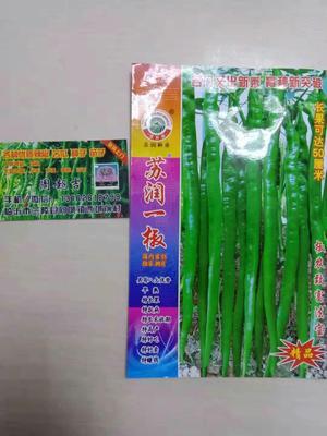 山东省临沂市兰陵县线椒种子 95%以上 良种