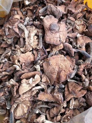 黑龙江省哈尔滨市尚志市干榛蘑 散装 1年