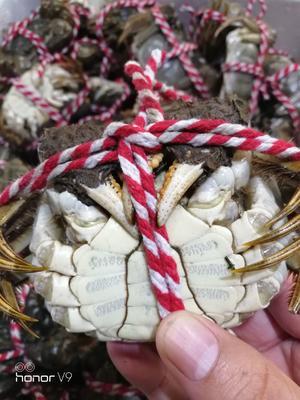 这是一张关于生态大闸蟹 3.5-4.0两 公蟹的产品图片