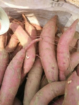 山东省德州市夏津县济薯26号红薯 红皮 混装通货