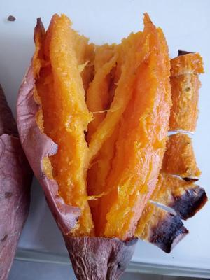 山东省德州市夏津县烟薯25 红皮 3两~6两