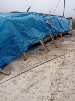 吉林省延边朝鲜族自治州敦化市西葫芦种子