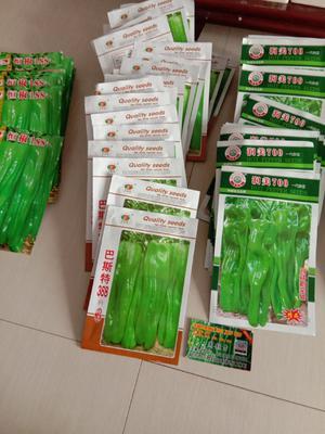 山东省临沂市兰陵县泡椒种子 95%以上 杂交种