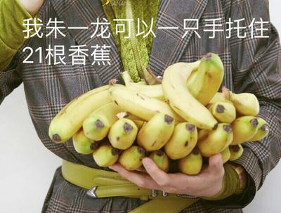 湖南省长沙市芙蓉区巴西香蕉 八成熟 40 - 50斤