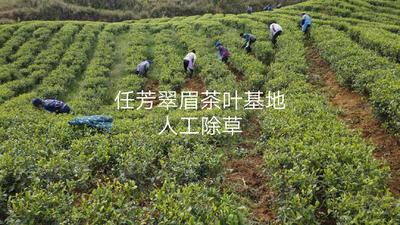 贵州省黔西南布依族苗族自治州安龙县任芳翠眉绿茶 袋装 一级
