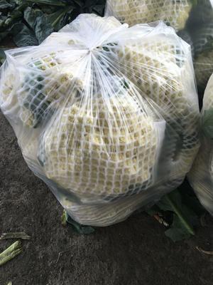 河北省秦皇岛市昌黎县有机花菜 松散 2~3斤 乳白色