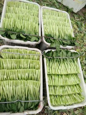 湖北省武汉市东西湖区秋绿60白菜 15斤以上 净菜