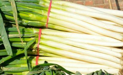 这是一张关于章丘大葱 3cm左右 25~30cm 毛葱的产品图片