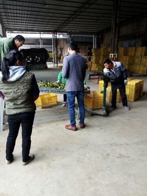 这是一张关于南丰蜜桔 3.5 - 4cm 1 - 1.5两的产品图片